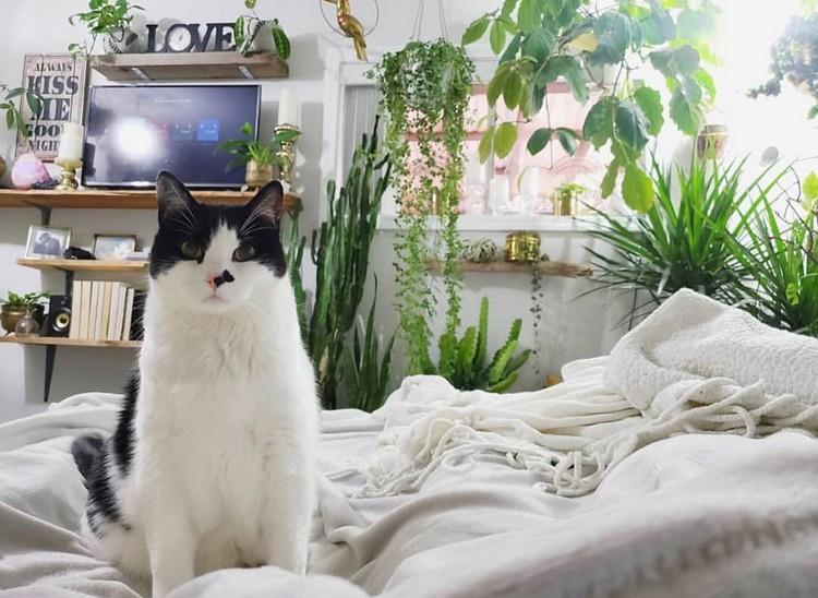 Bohemian Bedroom Decorating (10)