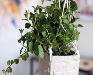 DIY Recycled Beautiful Hanging Planter Idea