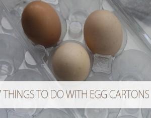 Reuse Egg Carton