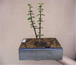 Recycling Old Book Handmade Planter