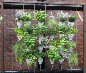 Recycled Plastic Bottles Gardening Idea