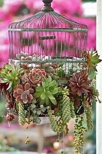 Bird Cages Creative Outdoor Decorating