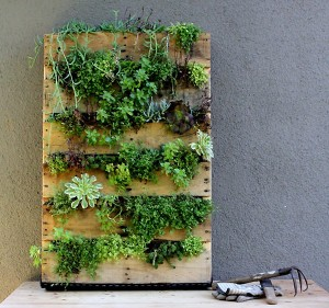 Upcycled Wall Garden Planter