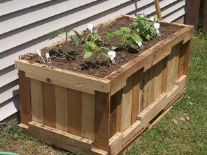 Wooden Pallet Gardening