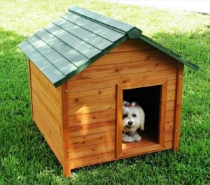 Beautiful Pallet Dog House