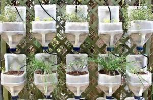 Recycled Plastic Milk Bottles Garden