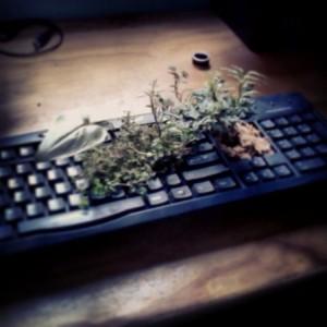 Keyboard Upcycled Planter