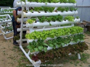 PVC Pipes Herb Garden