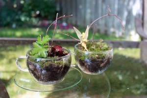 Cute Terrarium Ideas for the Home