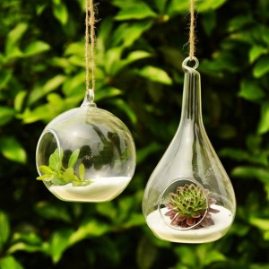 Decor Your Home with Terrariums