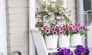 Ladder Flower Stand