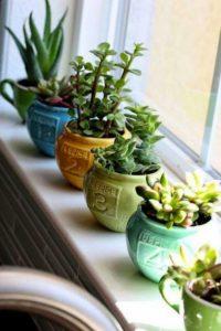Planter Pots for Home Decor