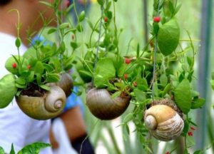 Plants for Home Decor