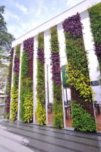 Vertical Garden Walls