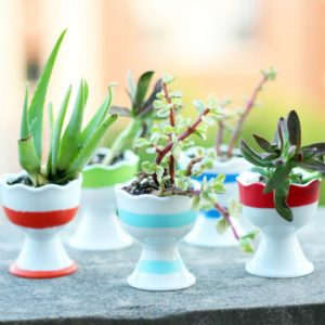Egg Cup Planted Succulents