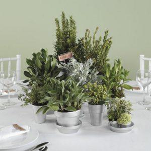Fresh Herb Centerpieces