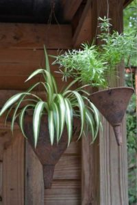 Old Funnels Planters