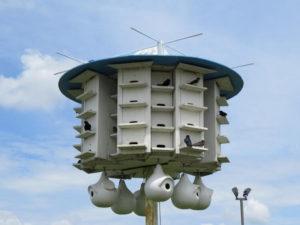 Blue Martin Birdhouse