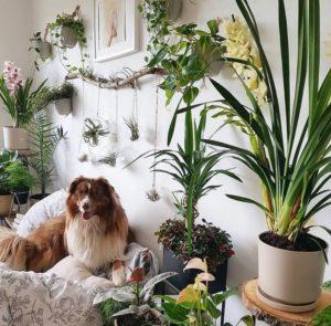 Bohemian Bedroom Decorating (4)
